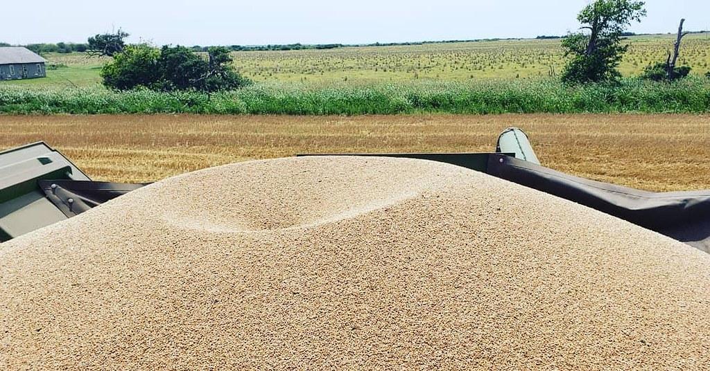 Schemper Harvesting 2019