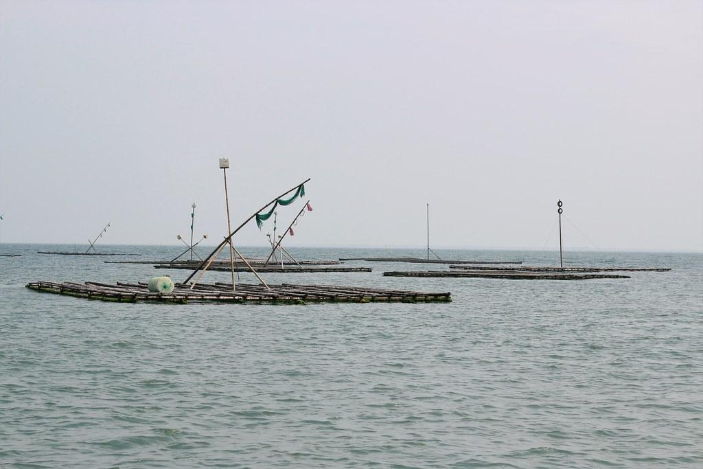 旬味牡蠣 (8)