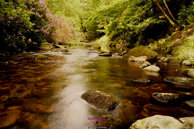 Shimna river in Tollymore forest fast flowing