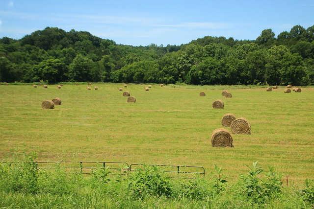 Carroll County Hayfield - Northwest Arkansas