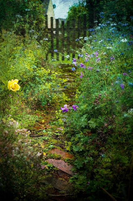 Rain on the garden path