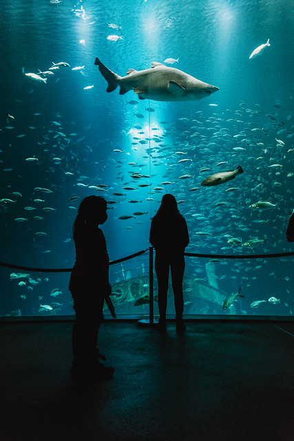 ozeaneum   l   under water   l   part 6   l   2019