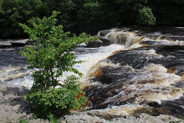 Aysgarth Falls - Wensleydale
