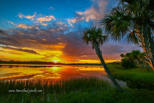 sun sunset tress palmspalmtree water lake pond sky clouds cloudy weather outdoors nature mothernature bow bows grass fortpierce florida usa