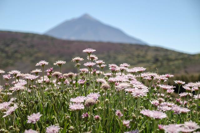 Teide en primavera
