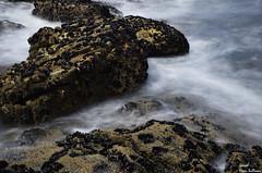 Polvo de mar