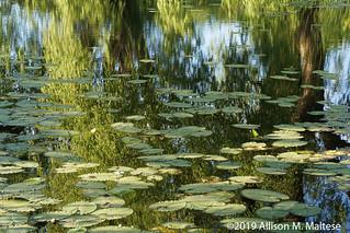 Bauer Park Pond a la Monet