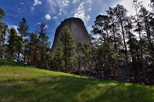 Devils Tower (Bear Lodge) Rising Above a Nearby Forest (Devils Tower National Monument)