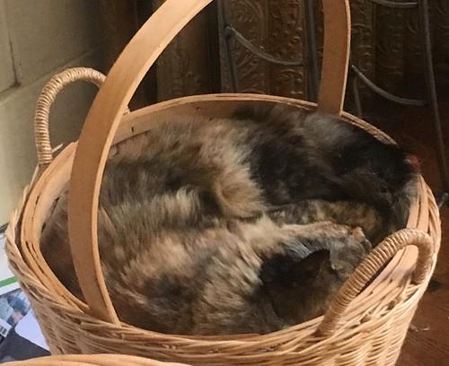 A basket full of tortoiseshell cat