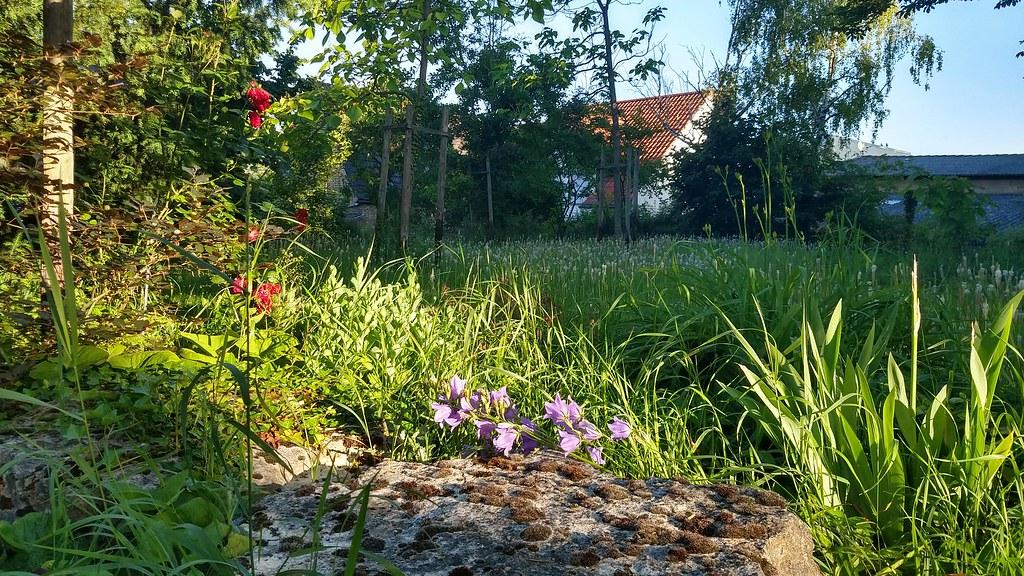 Auspowern vom #SunriseRun auf dem alten Friedhof Selzen