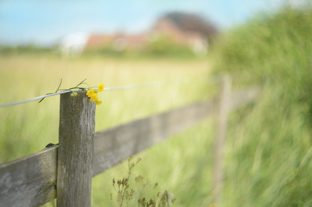 Happy Fence Friday... #HFF #HappyFenceFriday