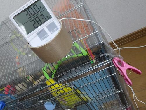 コザクラインコ温度計