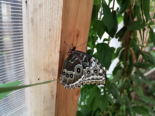 Butterfly House in Praid, Romania