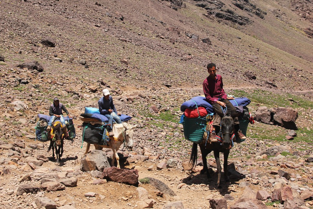 Mules, Mount Toubkal trek