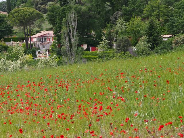 Abgelegenes Haus Hinter einer Wiese. Reillanne, Provence, France