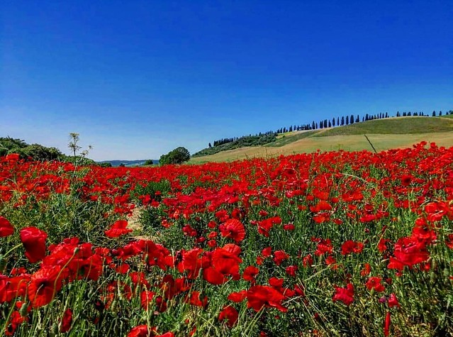 📍San Giovanni d'Asso . . . #like #follow #share #comment #subscribe #castelnuovodellabate #montalcino #borghettomontalcino #tuscany #tuscanygram #italy #italy #italia #santantimo #valdorcia #travel #travelblogger #travelphotography #travelgr