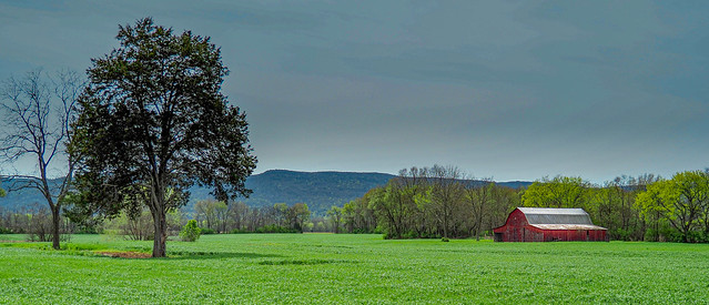 Day on the Farm - Near Winchester, Tennessee