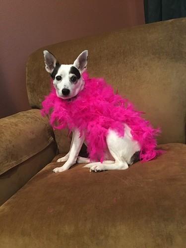 SKB Dog pink boa