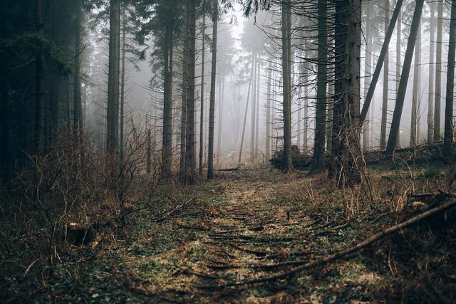 A Kingdom for a forest dweller