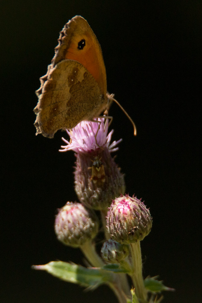 Schmetterlingswettbewerb 2019