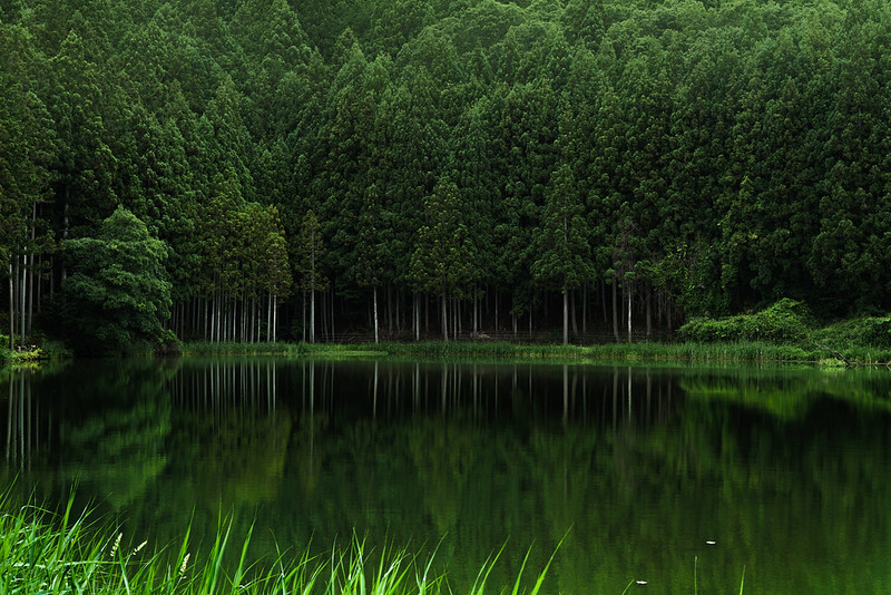 Reflection of Forest