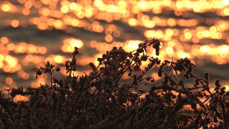 Солнечные блики