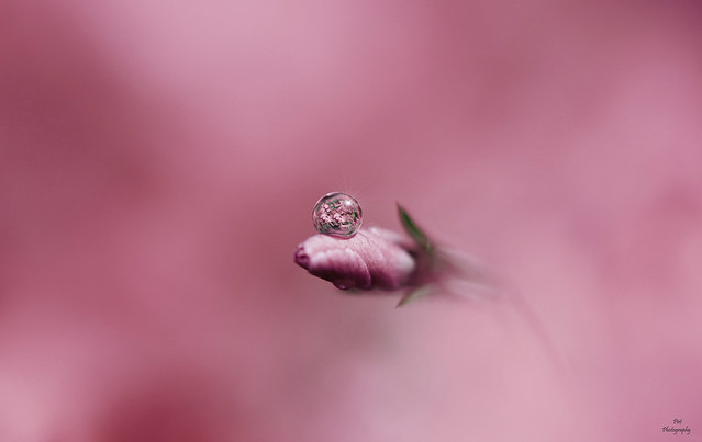 Water Drop Reflection....