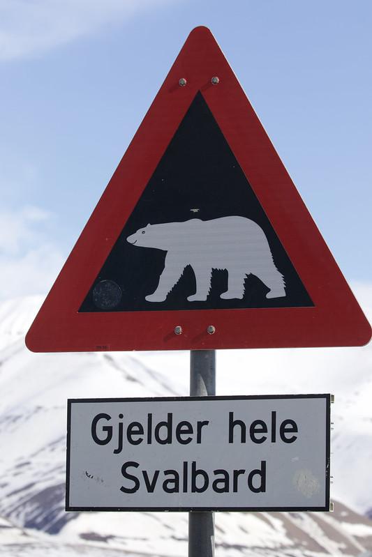 Polar Bear sign_Lomngyearbyen_Svalbard_Norway_Ascanio 199A9133