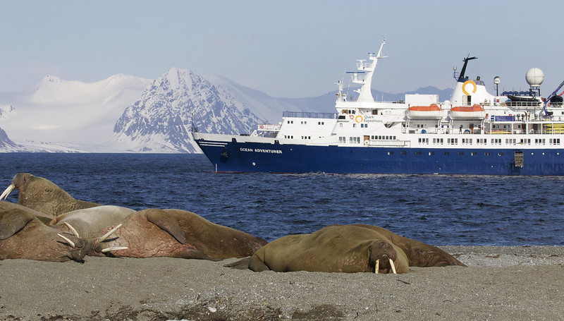 Ocean Adventurer and walruses Ascanio_Magdalena Fjord_Ascanio 199A8393