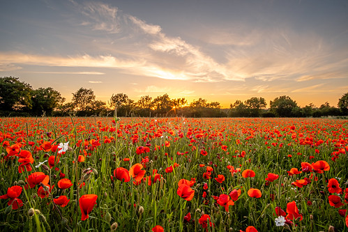 fuji norfolk poppyfield samyang12mm sunset trees wideangle xt2 norwich england unitedkingdom