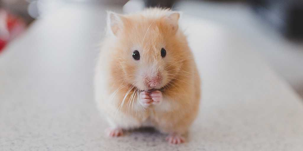 une-enzyme-prolonge-la-durée-de-vie-des-souris
