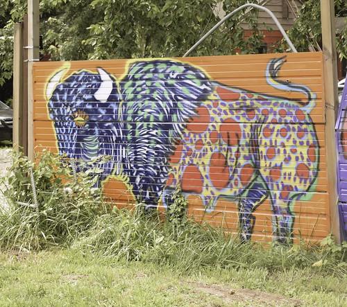 Buffalo on Edison Street