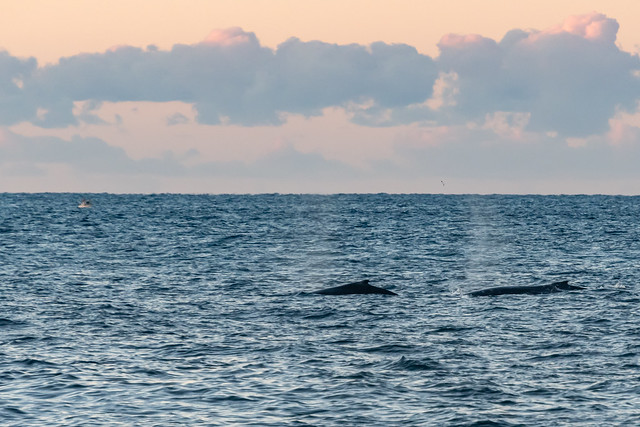 Whales and Sunrise