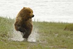 Running Water Bear