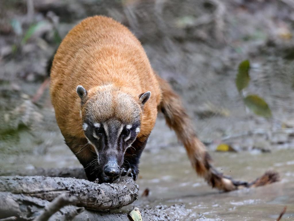 Pantanal_3874