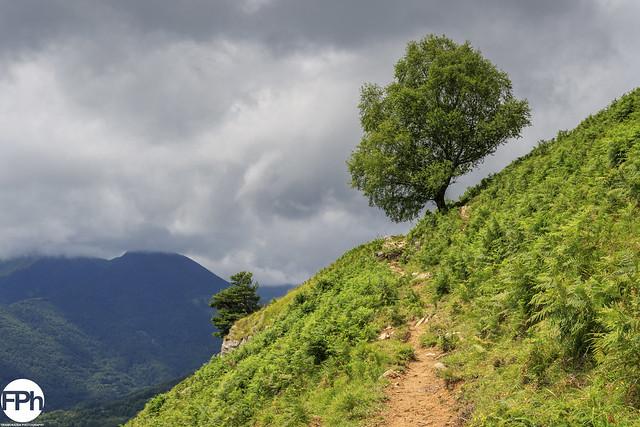 Chemin du col de l'Arraing