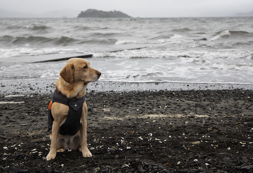 <p>Beach day with Bella. The weather is pretty grim, but she doesn't seem to mind.</p>