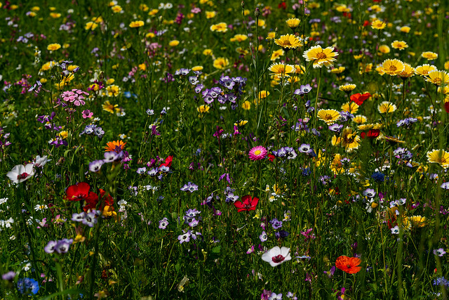 Schöne Blumenwiese
