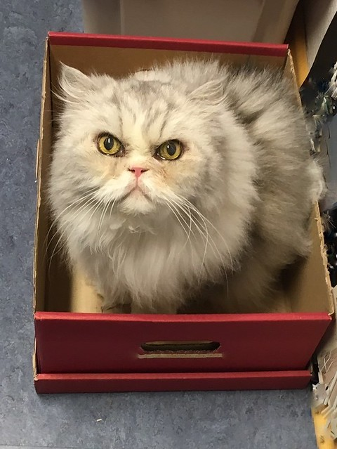 Cat #1 in the box
