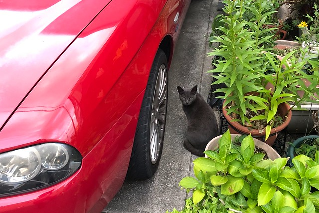Today's Cat@2019-06-15