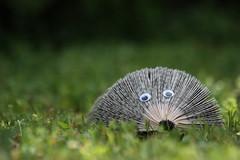 L'élégance naturelle du hérisson...