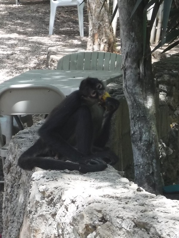 Banana Thief at Cenote