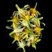 59710.01 Narcissus