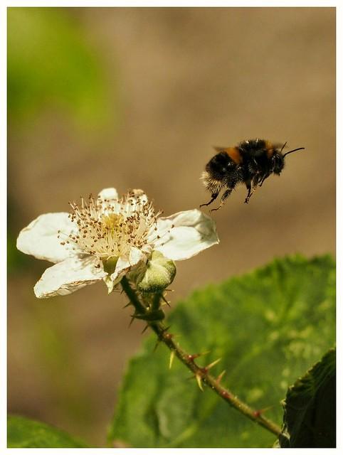 Bee...off.