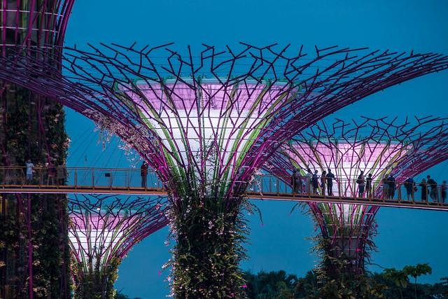 Supertree skyway