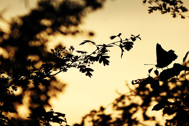 silhouettes of nature