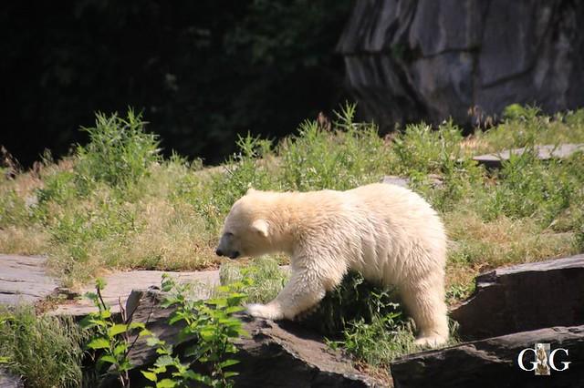 Besuch Tierpark Friedrichsfelde 15.06.201978