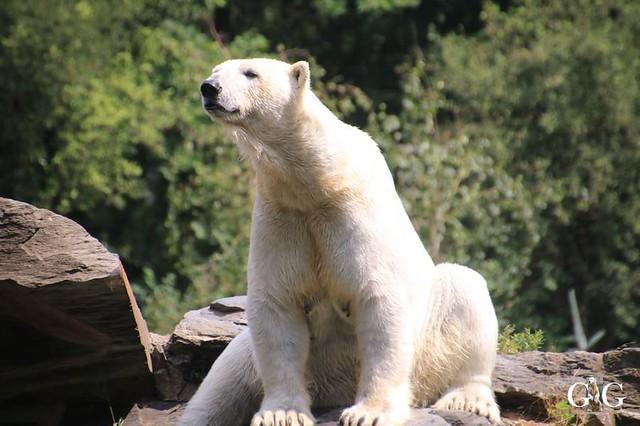 Besuch Tierpark Friedrichsfelde 15.06.201977