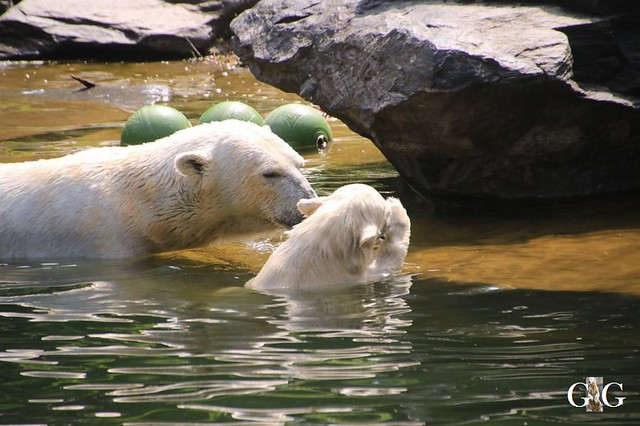 Besuch Tierpark Friedrichsfelde 15.06.201962