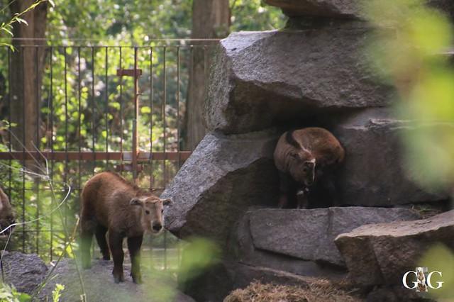 Besuch Tierpark Friedrichsfelde 15.06.201947